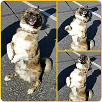 Adopt A Pet :: Pretzel - Ogden, UT