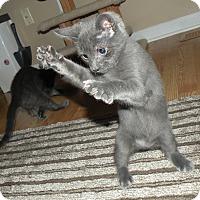 Adopt A Pet :: Valentino - Turnersville, NJ