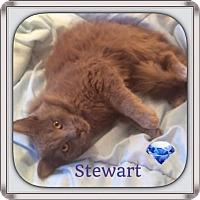 Adopt A Pet :: Stewart - Harrisburg, NC