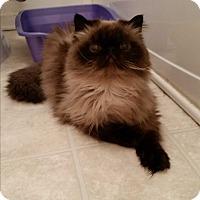 Adopt A Pet :: Cashmere - Medford, NJ