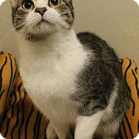 Adopt A Pet :: Zoli - Verona, WI