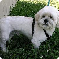 Adopt A Pet :: Boiney - Waldorf, MD