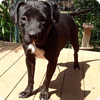 Adopt A Pet :: Hanna B - Santa Ana, CA