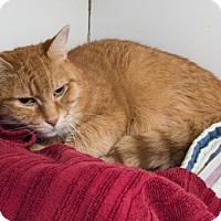 Adopt A Pet :: PAPPY - Methuen, MA