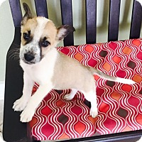 Adopt A Pet :: Malibu - Woonsocket, RI