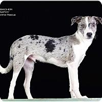 Adopt A Pet :: Kliff - Cincinnati, OH