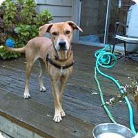 Adopt A Pet :: Champagne - Seahurst, WA