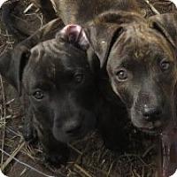 Adopt A Pet :: Darlene & Darla - St Petersburg, FL