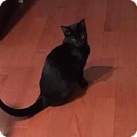 Adopt A Pet :: Neptune - Philadelphia, PA