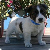 Adopt A Pet :: Vito - Waldorf, MD