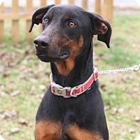 Adopt A Pet :: Duke - Murphysboro, IL