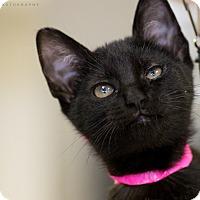 Adopt A Pet :: ANGEL - Houston, TX