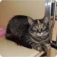 Adopt A Pet :: Blanche - Modesto, CA