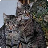 Adopt A Pet :: George & Maggie - Finleyville, PA