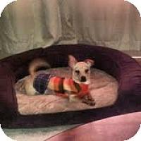 Adopt A Pet :: Tye - Shawnee Mission, KS
