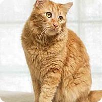 Adopt A Pet :: Guliiver - Phoenix, AZ