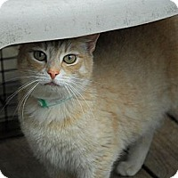 Adopt A Pet :: Morgan - Lunenburg, MA