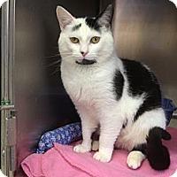 Adopt A Pet :: Levi - Elkins, WV