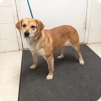 Adopt A Pet :: Mandy - Lancaster, VA