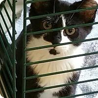 Adopt A Pet :: Lucy - Ortonville, MI