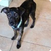 Adopt A Pet :: Sampson - Las Vegas, NV