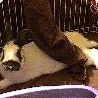 Adopt A Pet :: Dean - Conshohocken, PA