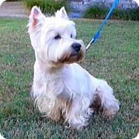 Adopt A Pet :: Augie - Carrollton, TX