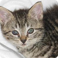 Adopt A Pet :: Sweety - Hudson, NY