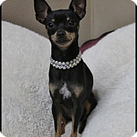 Adopt A Pet :: Sophee - Rockwall, TX