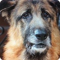 Adopt A Pet :: DOGO VON DONZDORF - Los Angeles, CA