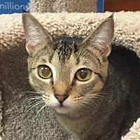 Adopt A Pet :: Maryann - Smyrna, GA