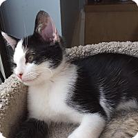 Adopt A Pet :: Jordan - Covington, KY
