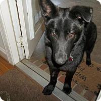 Adopt A Pet :: Allie - Morrisville, NC