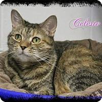 Adopt A Pet :: Celeste - Shippenville, PA