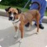 Adopt A Pet :: Sally-Jinks - Seattle, WA