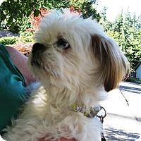 Adopt A Pet :: K.C. - Salem, OR