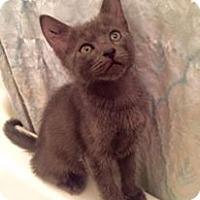 Adopt A Pet :: Leo - Gainesville, FL