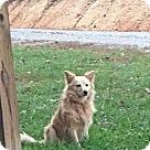Adopt A Pet :: Daisey Sue