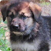Adopt A Pet :: Diego - Kyle, TX