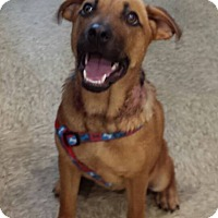 Adopt A Pet :: Ava ~ Adoption Pending - Youngstown, OH