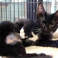 Adopt A Pet :: Thing - Sarasota, FL