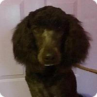 Adopt A Pet :: Stanley - Alta Loma, CA