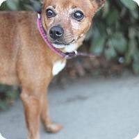 Adopt A Pet :: Donna - Goleta, CA
