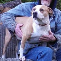 Adopt A Pet :: Candace - Thomasville, NC