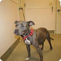 Adopt A Pet :: Coco - Wildomar, CA