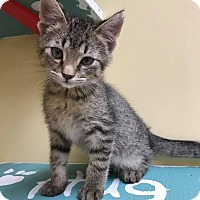 Adopt A Pet :: Simon - Maryville, MO