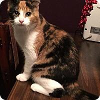 Adopt A Pet :: Kim - Pendleton, NY