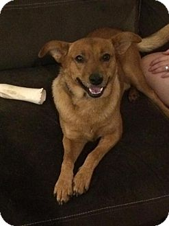 Shepherd (Unknown Type) Mix Dog for adoption in Rockville, Maryland - Cooper