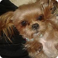 Adopt A Pet :: Gabby - Bakersfield, CA