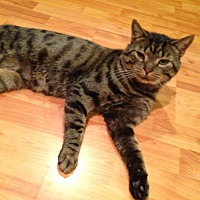 Adopt A Pet :: Maxwell/ dog alike personality - Bryn Mawr, PA